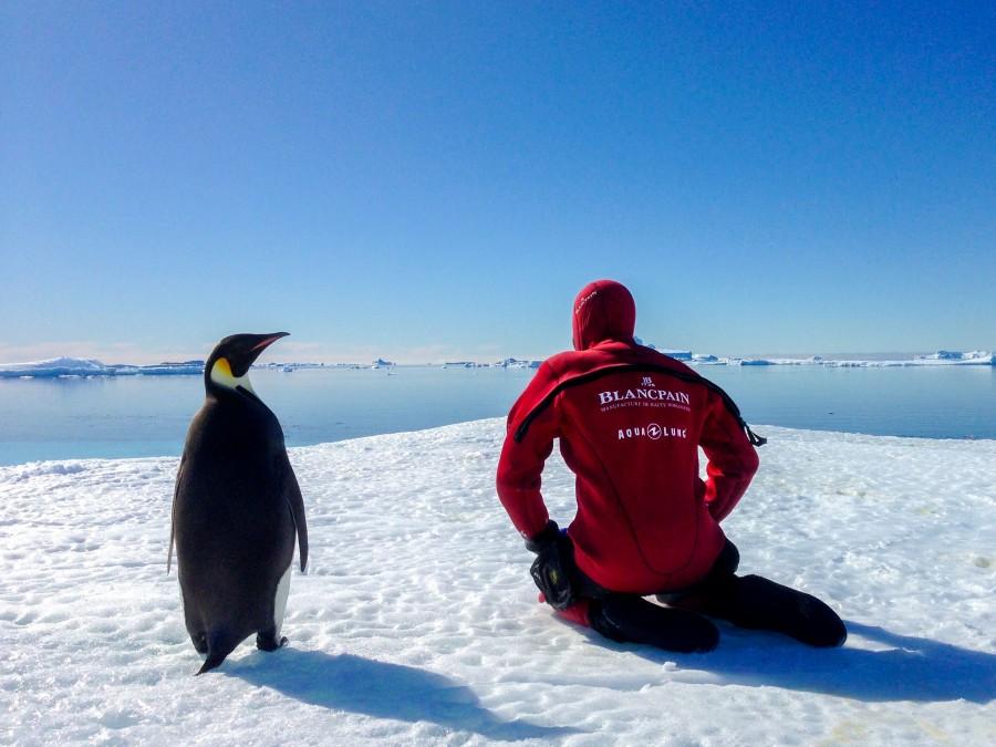 Laurent Ballesta se prépare à la plongée aux côtés d'un manchot Empereur ©Cédric Gentil_Expédition Wild-Touch Antarctica!