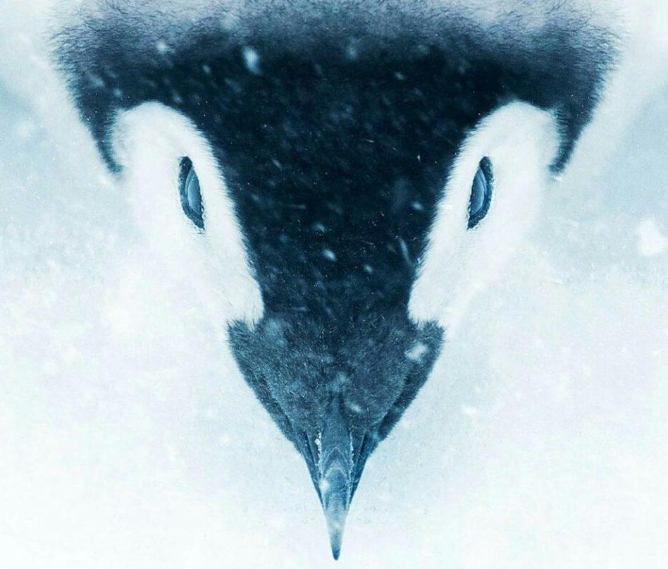 la_marche_de_l_empereur_l_appel_de_l_antarctique